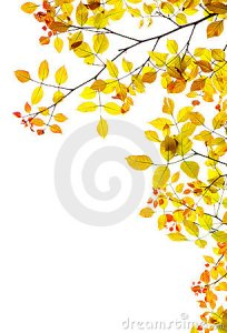 autumn-background-fall-leaves-natural-border-11474004